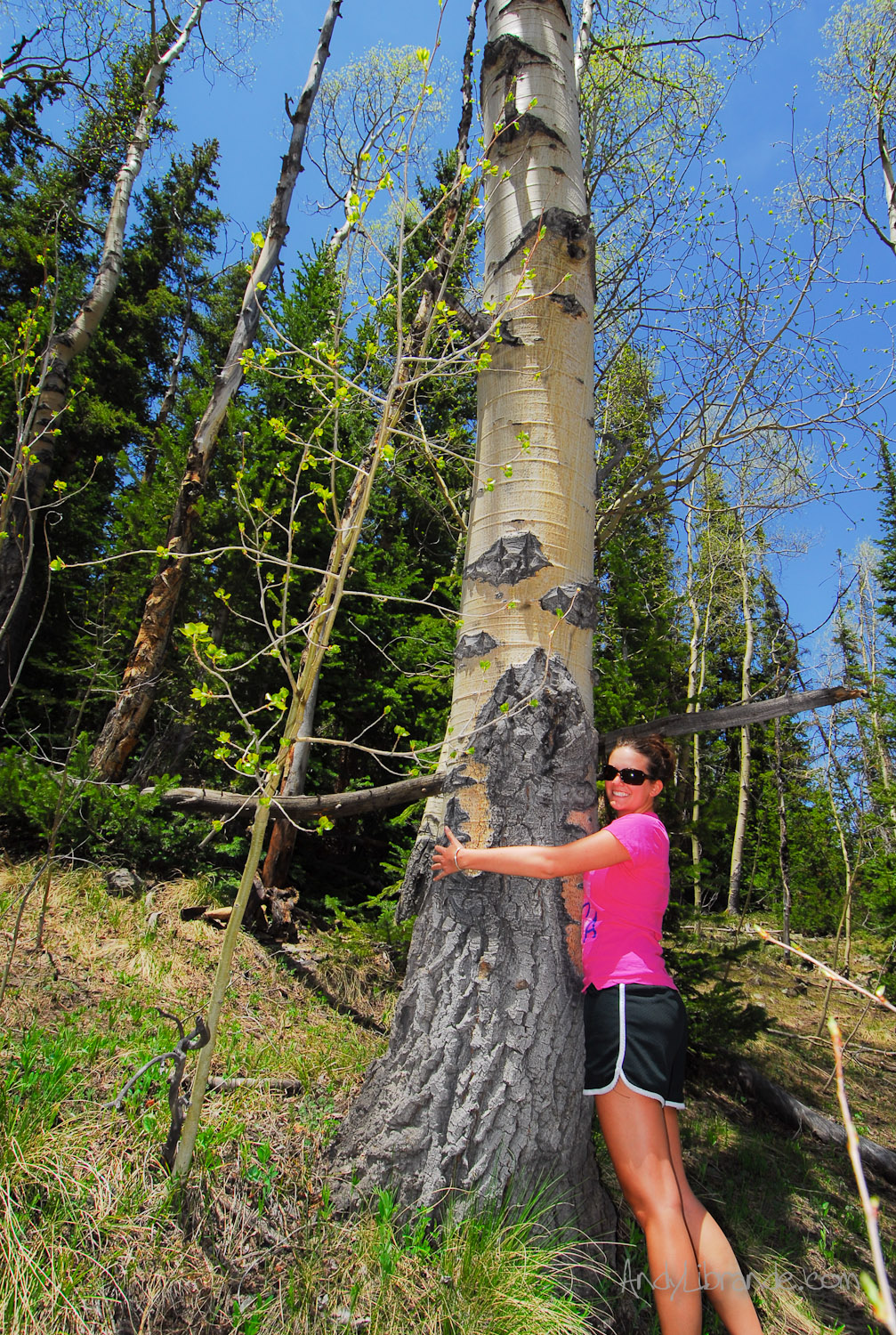Aspen Tree-hugging