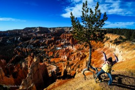 Dancing with the Ancient Trees at Bryce Canyon National Park