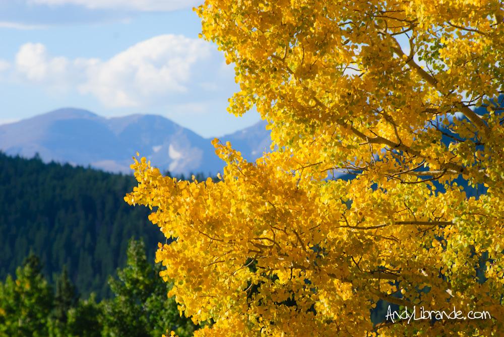 Aspens on Squaw Pass Colorado