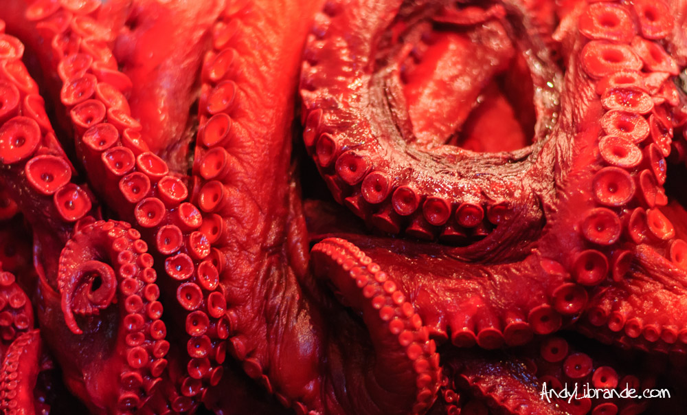 Octopus at the Tsukiji Fish Market