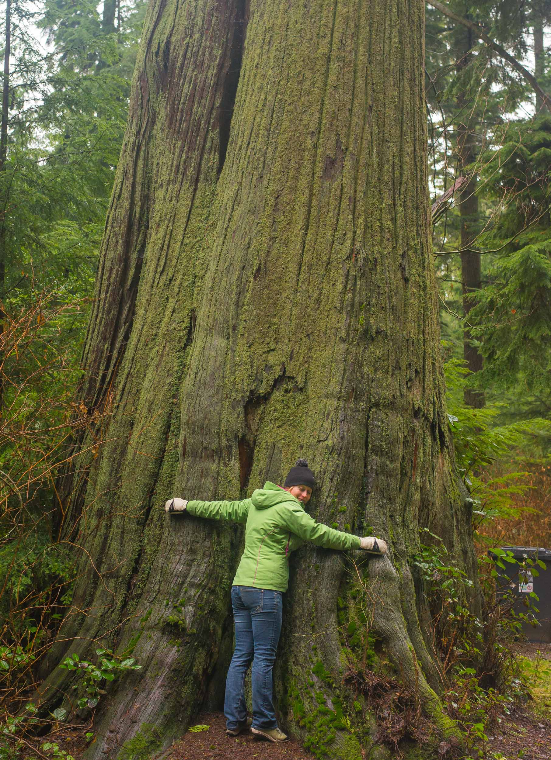 Tree Hugging in Stanley Park