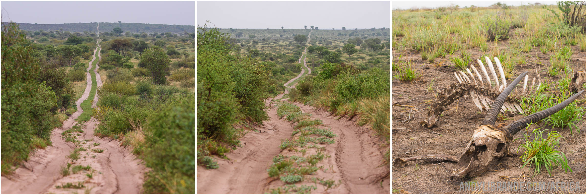 CEntral Kalahari Cutline Road to Tau Pan
