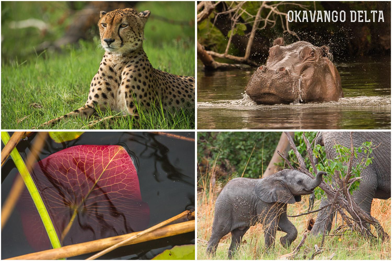 Okavango-andylibrande1