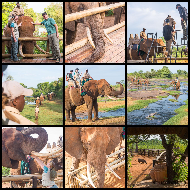 Elephant Safari Victoria Falls