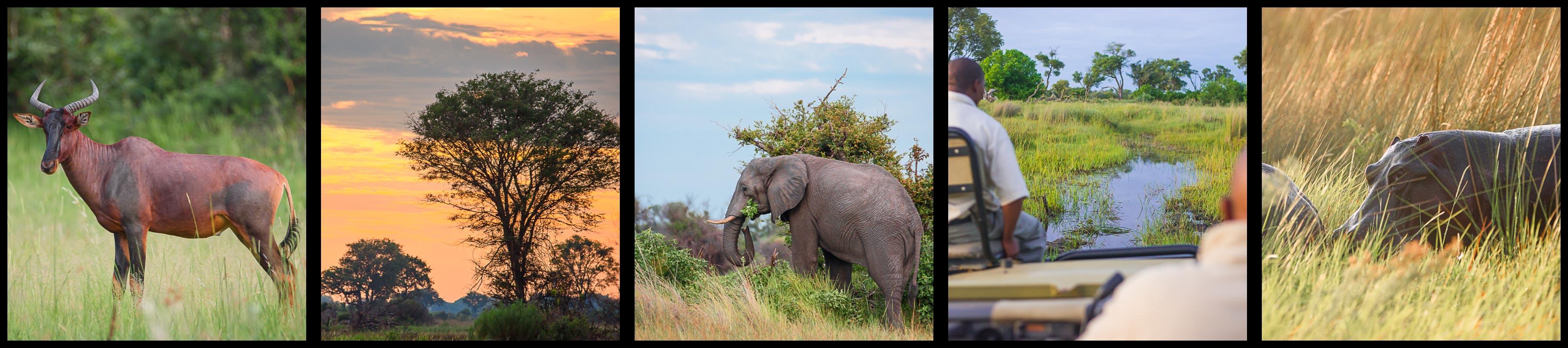 Sunrise Safari in the Okavango Delta