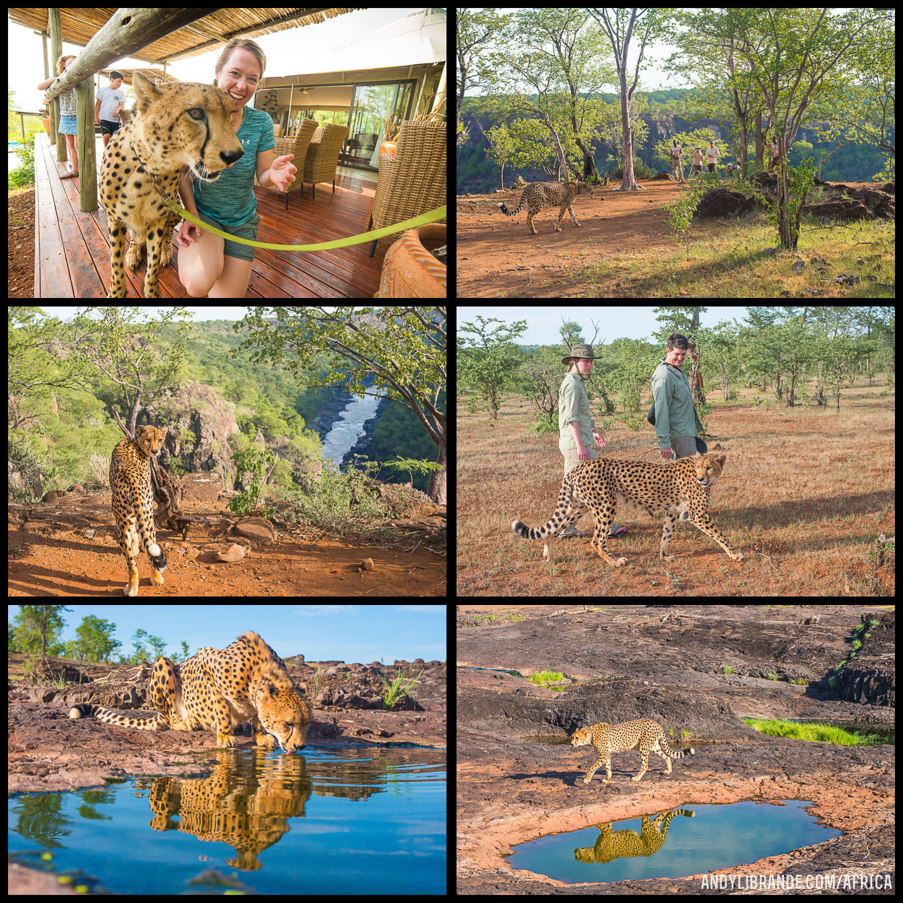 Cheetah Encounter Victoria Falls